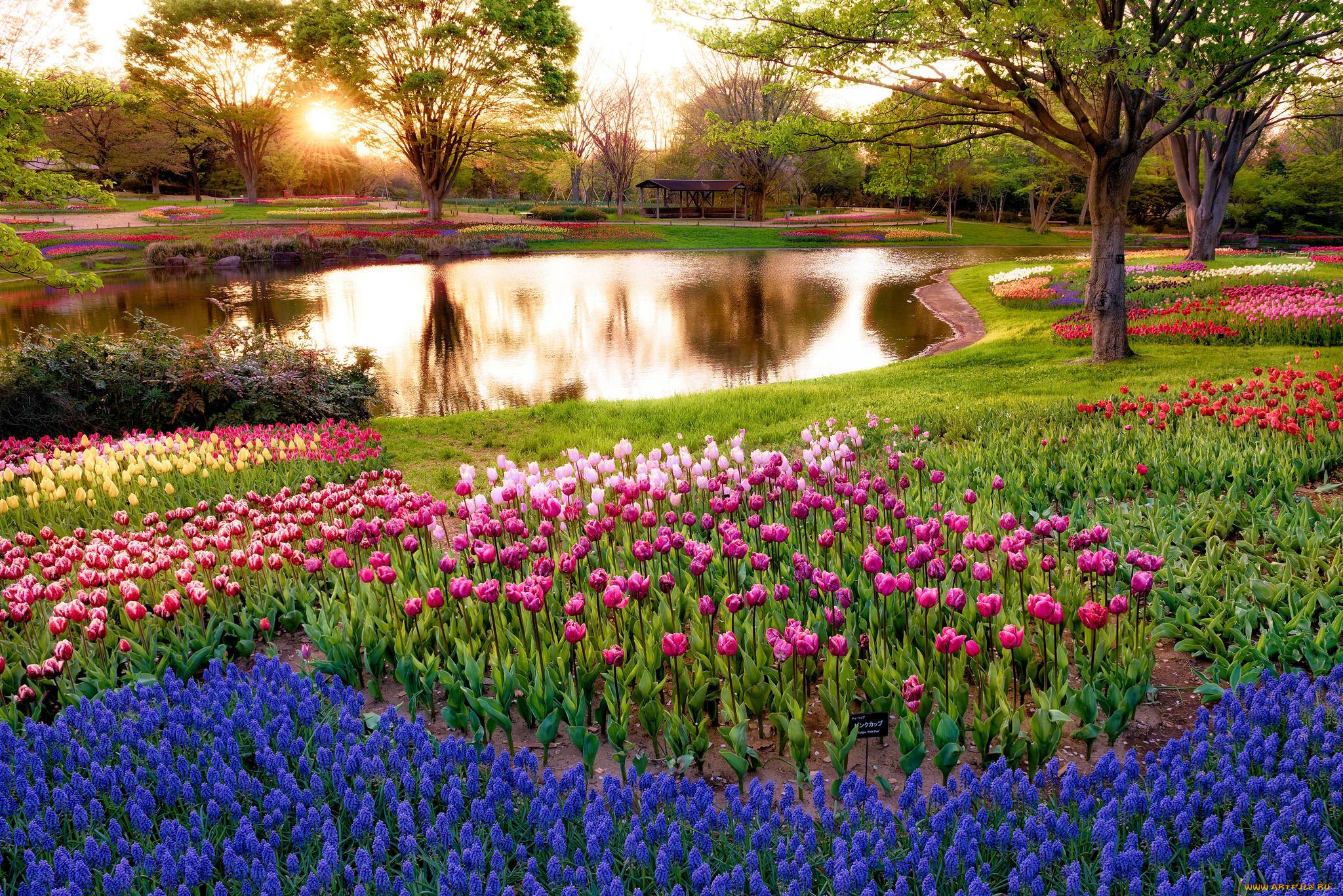 фото весна природа хорошего качества доме прекращались, нашел